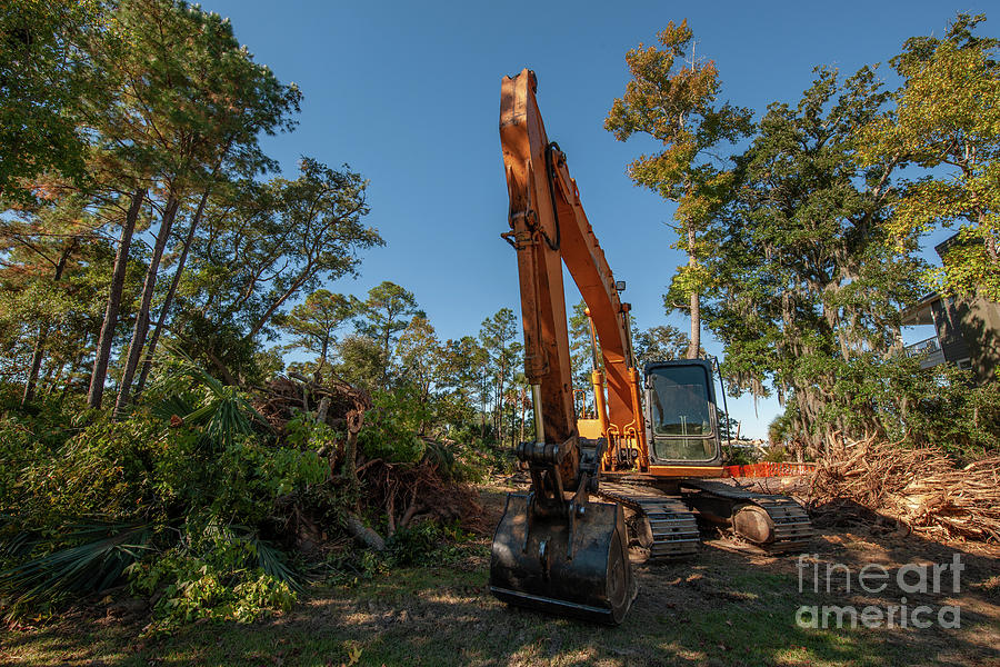 Tree Removal - Land Clearing Photograph