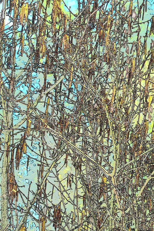 Tree Seed Pod Blue Sky Photograph