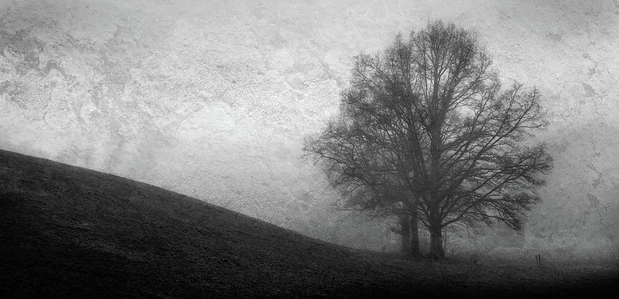 Tree Shrouded In Mist Photograph