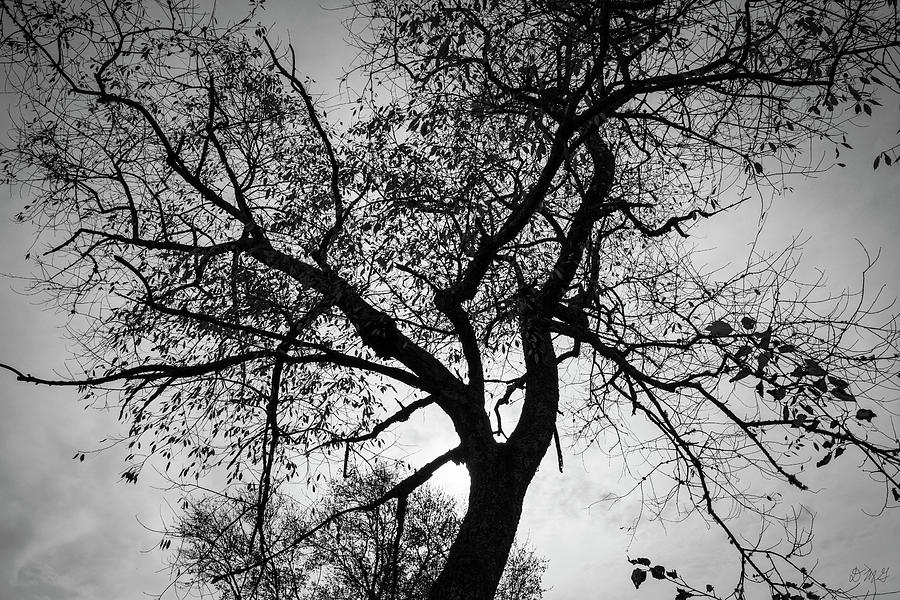 Tree Silhouette BW by David Gordon