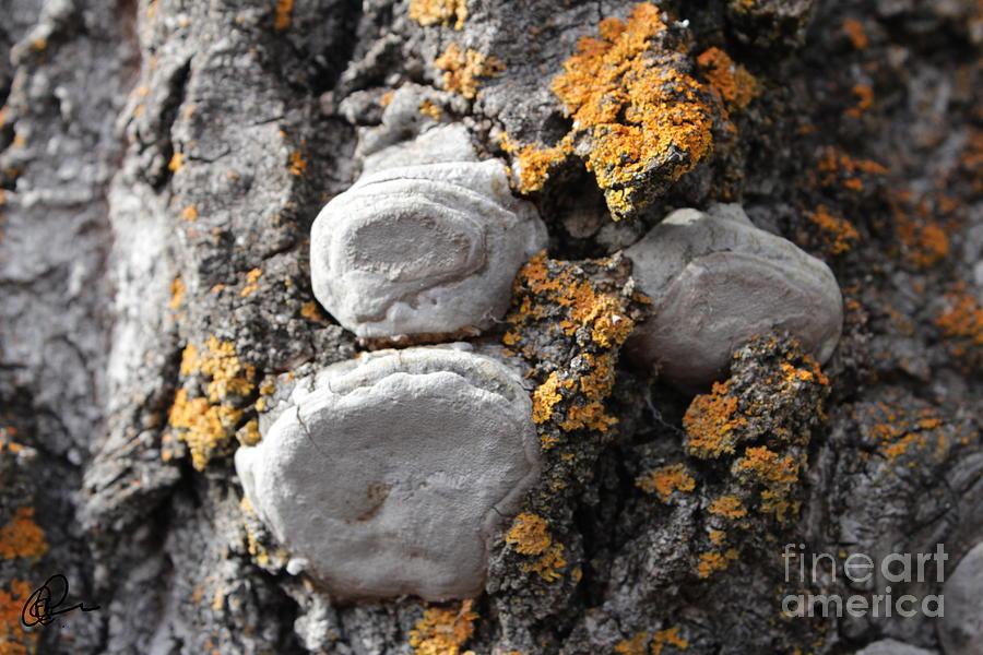 Tree Warts by Ann E Robson