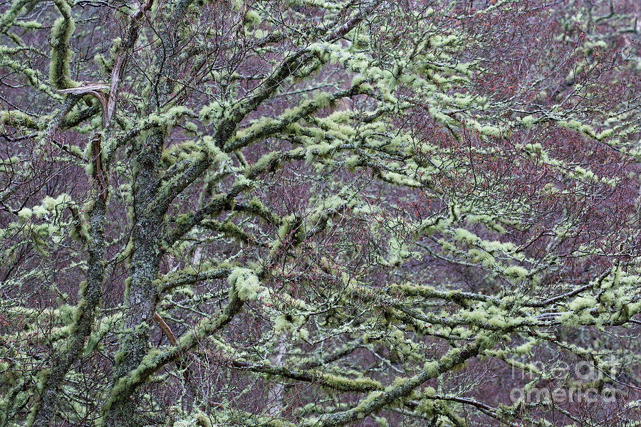 Tree with Moss by Arterra Picture Library