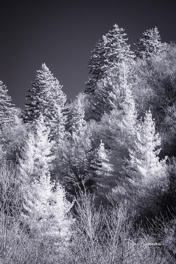 Treeline 1107 Photograph