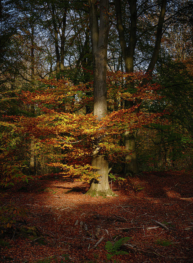 Treeluminate by Wim Lanclus