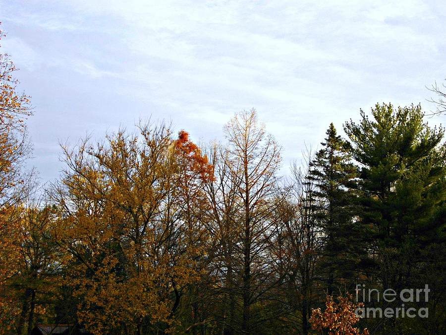 Landscape Photograph - Trees and Branches in the Fall by Frank J Casella