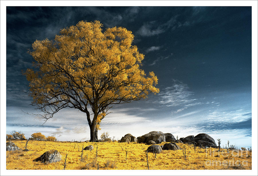 Trees and Rocks 2 by Russell Brown