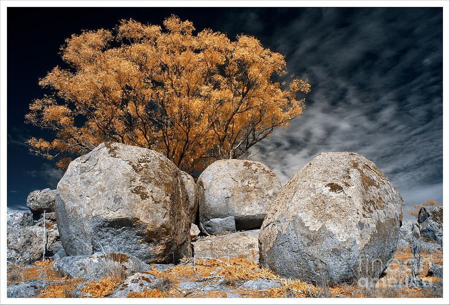 Trees and Rocks 3 by Russell Brown