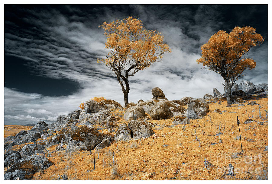 Trees and Rocks 4 by Russell Brown