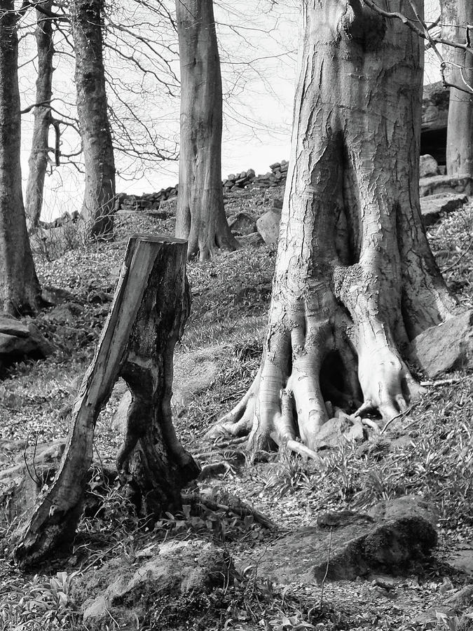 trees and roots by Philip Openshaw