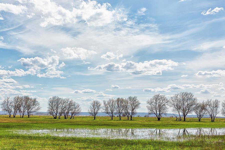 Trees In A Farm Field Photograph