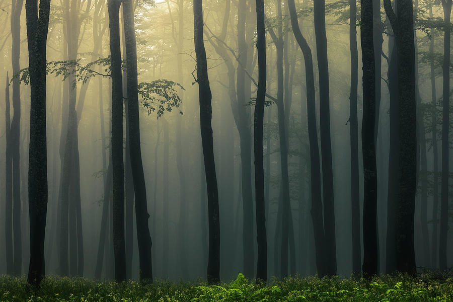 Trees In Dark Forest Photograph