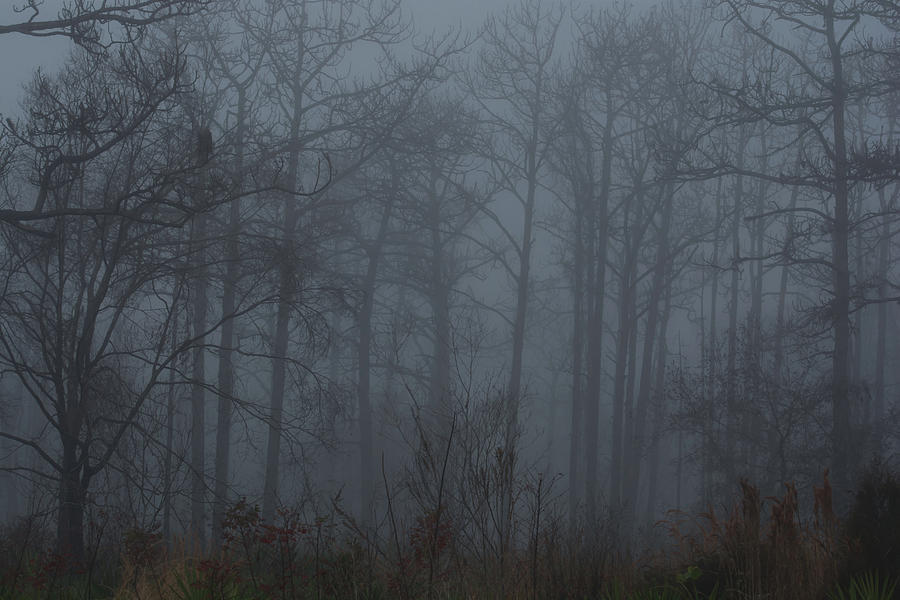 Trees in foggy woods by Zina Stromberg