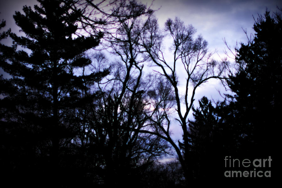 Landscape Photograph - Trees Silhouetted Against the Sunrise Stormy Sky by Frank J Casella
