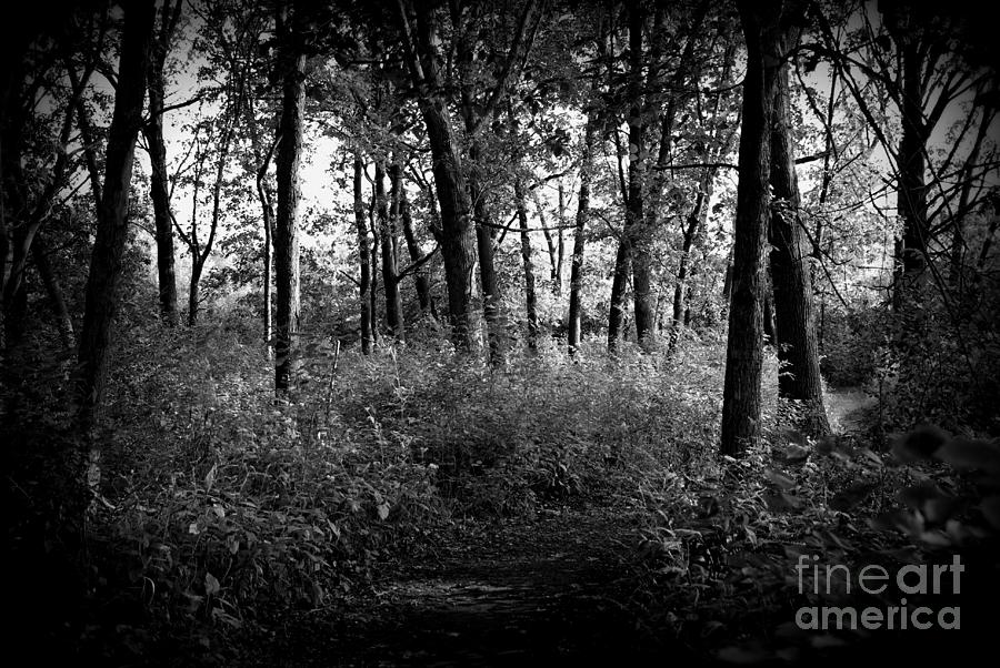 Nature Photograph - Trees Through the Forest - Black and White by Frank J Casella
