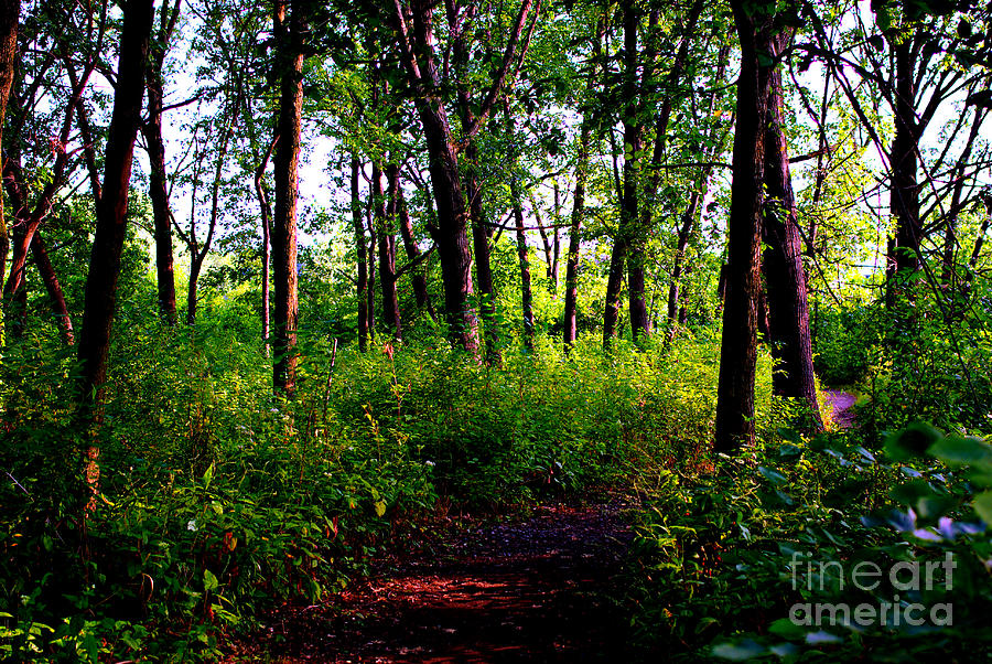 Nature Photograph - Trees Through the Forest - Bold by Frank J Casella