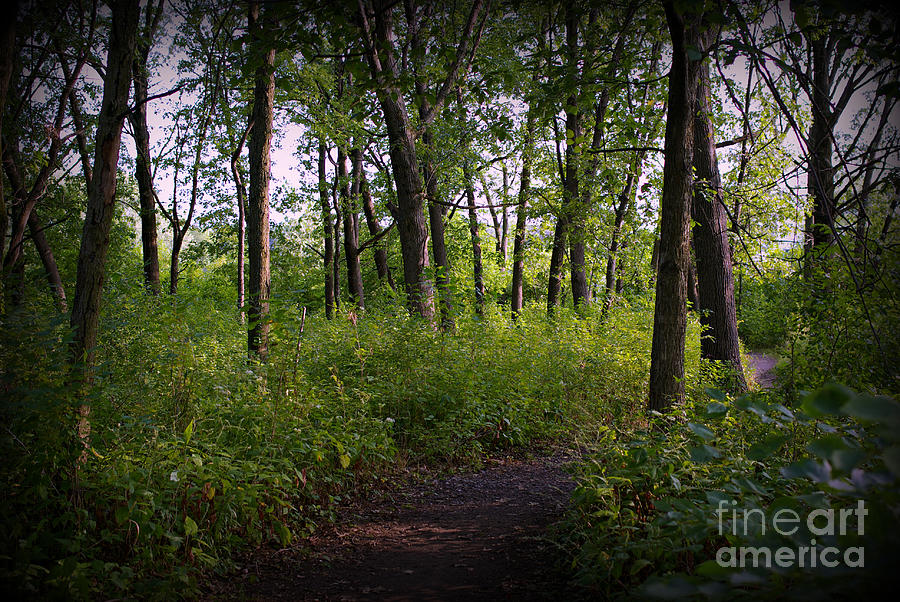 Nature Photograph - Trees Through the Forest - Natural by Frank J Casella