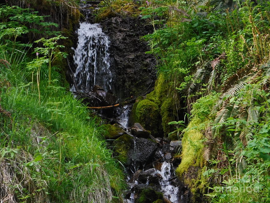 Cascade Photograph - Trickle Down Green Economy by YHWHY Vance
