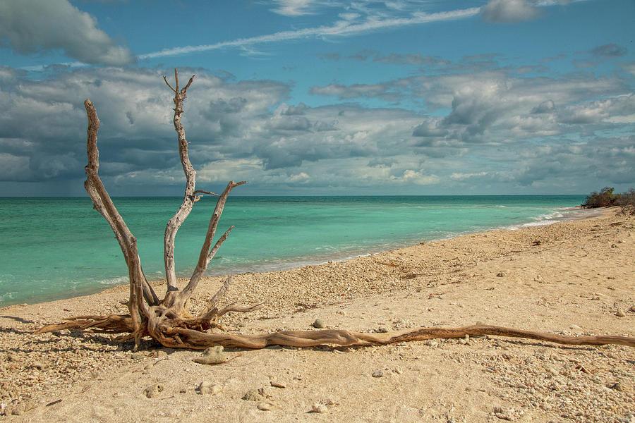 Tropical Beach Driftwood by Kristia Adams