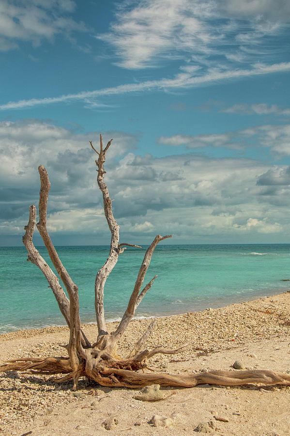 Tropical Beach Driftwood Vertical by Kristia Adams