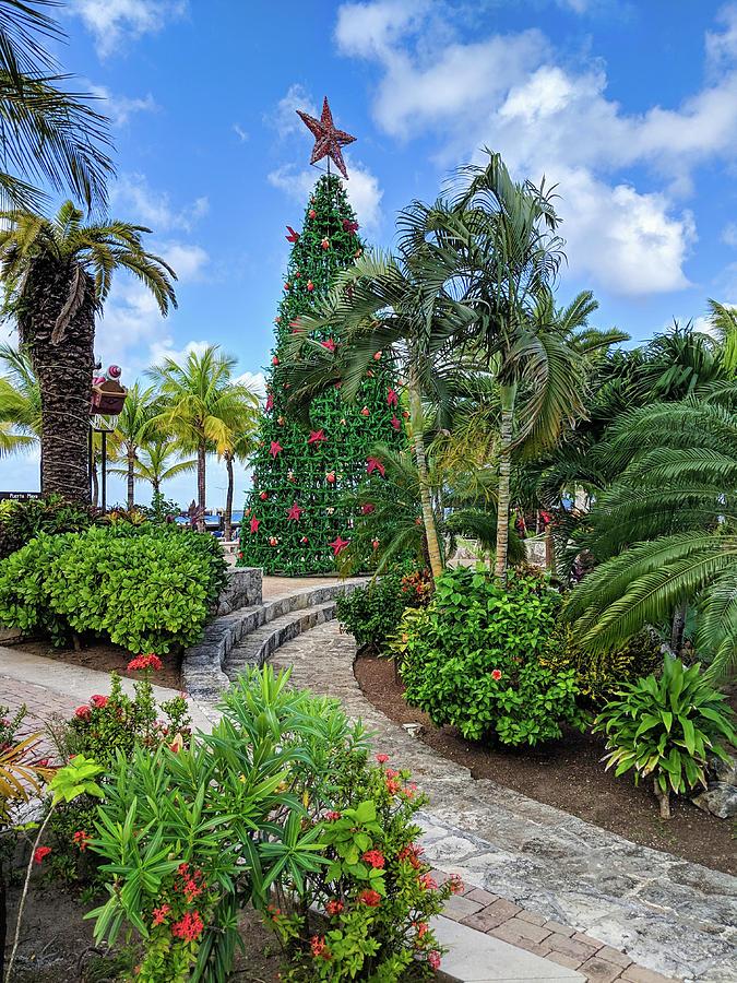 Tropical Christmas by Portia Olaughlin