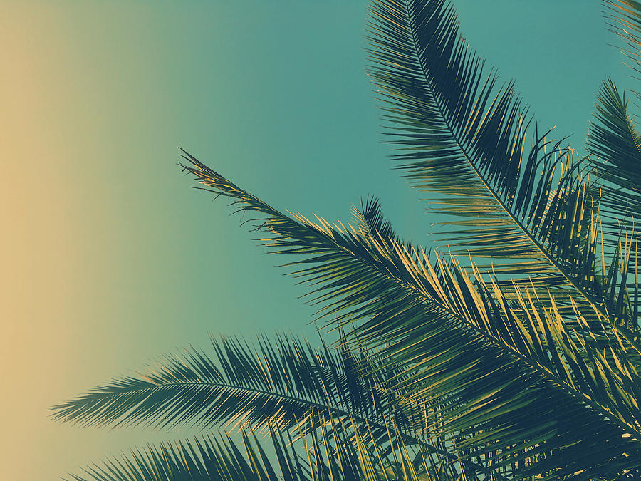 Tropical Dream I by Anne Leven