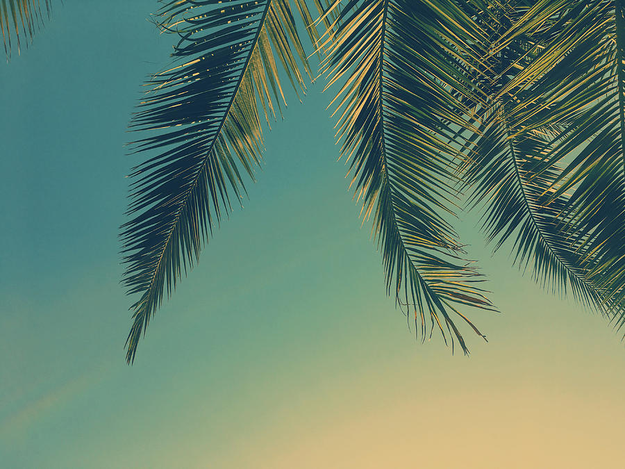 Tropical Dream II by Anne Leven