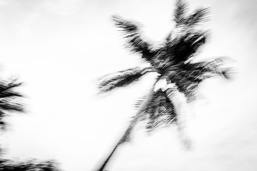 Tropical Dreaming 2 - Black And White 2 Photograph