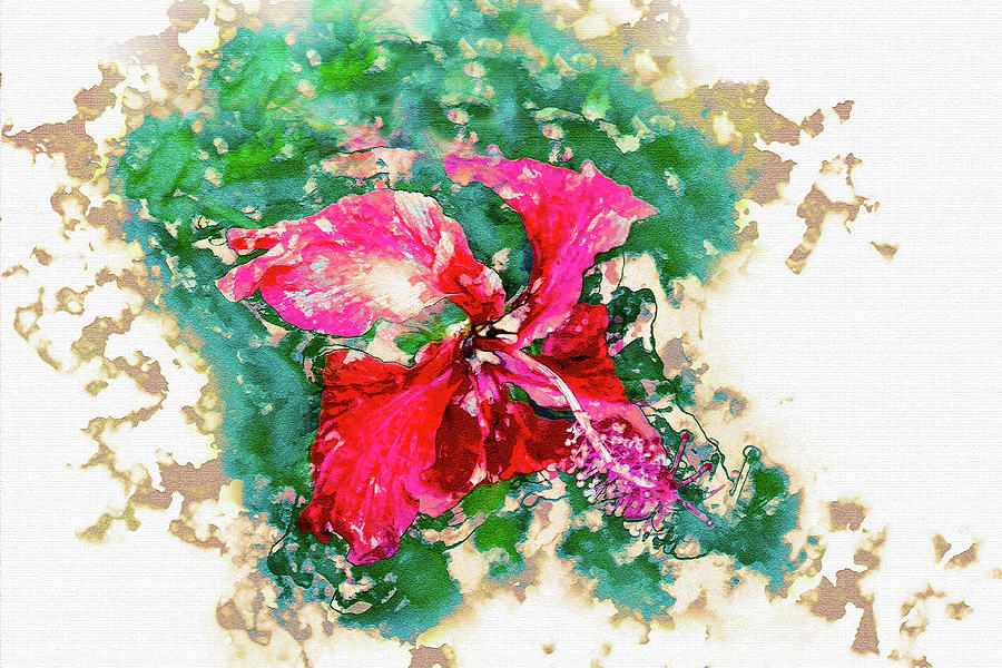 Tropical Hibiscus by Max Huber