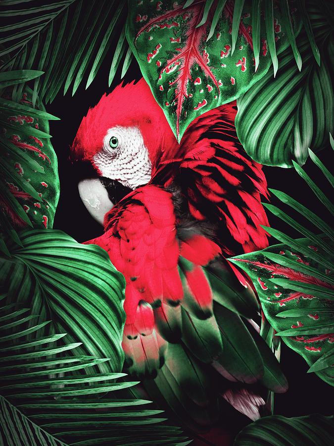 Tropical Parrot Digital Art