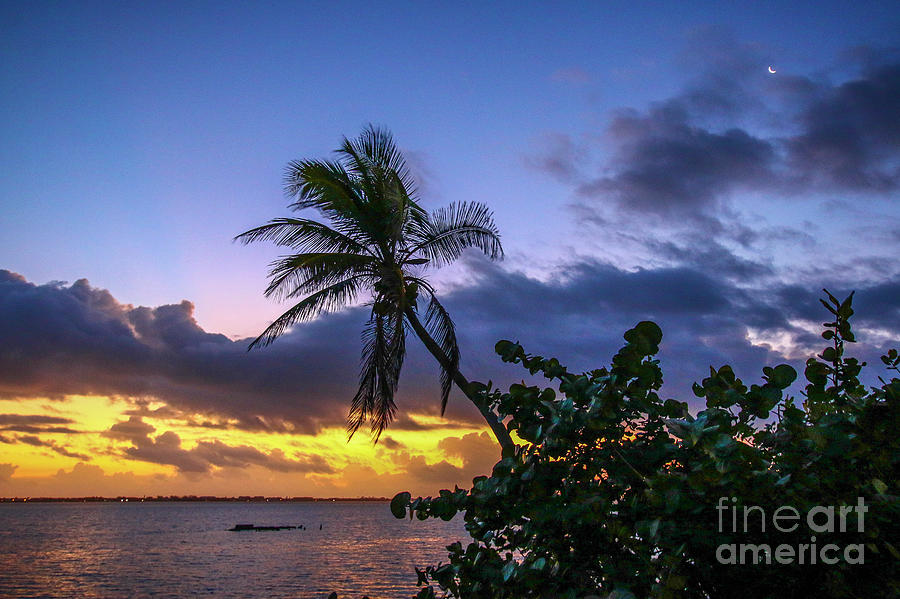 Tropical Sunrise with Moon by Tom Claud