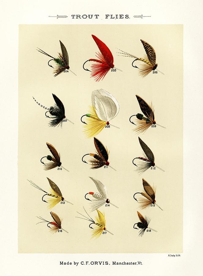 Trout Flies Plate 14 Photograph