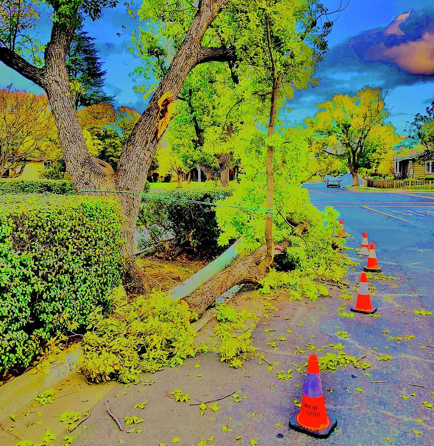 Truck Sideswiped Tree Photograph