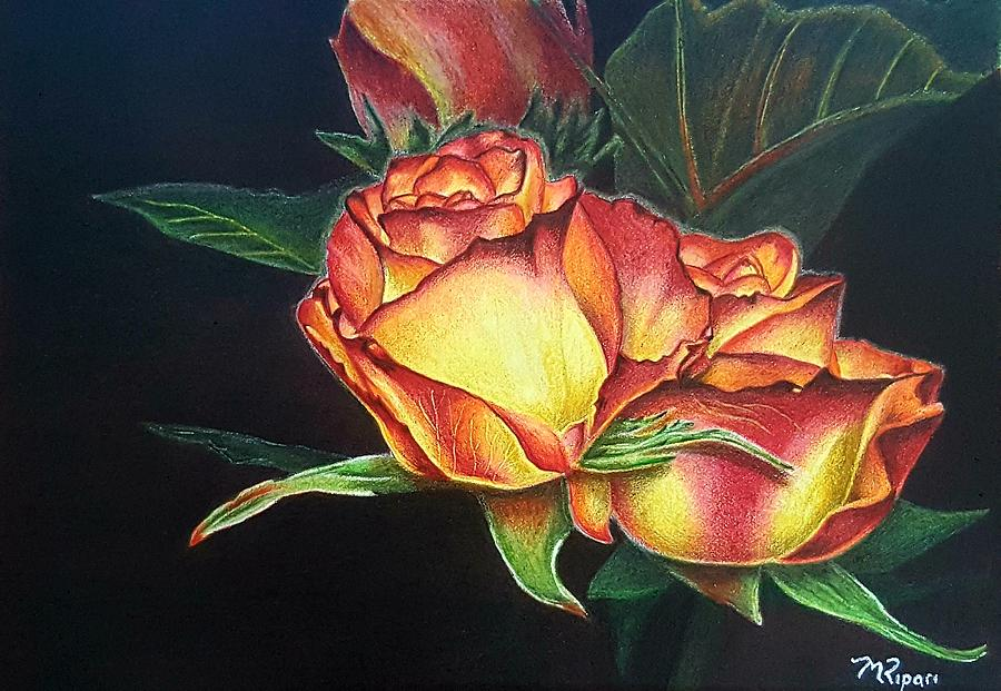 Roses Drawing - True Beauty by Michelle Ripari