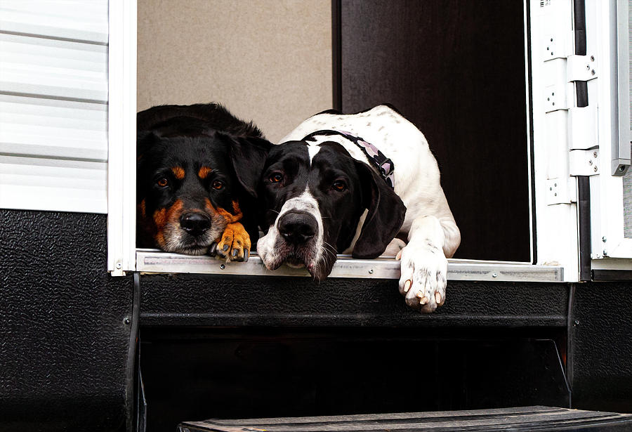 Dog Photograph - Tuck and Heid - Paintography by Anthony Jones