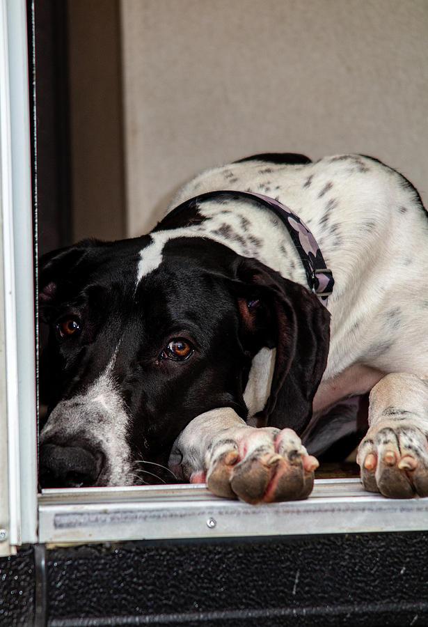 Dog Photograph - Tucker  by Anthony Jones