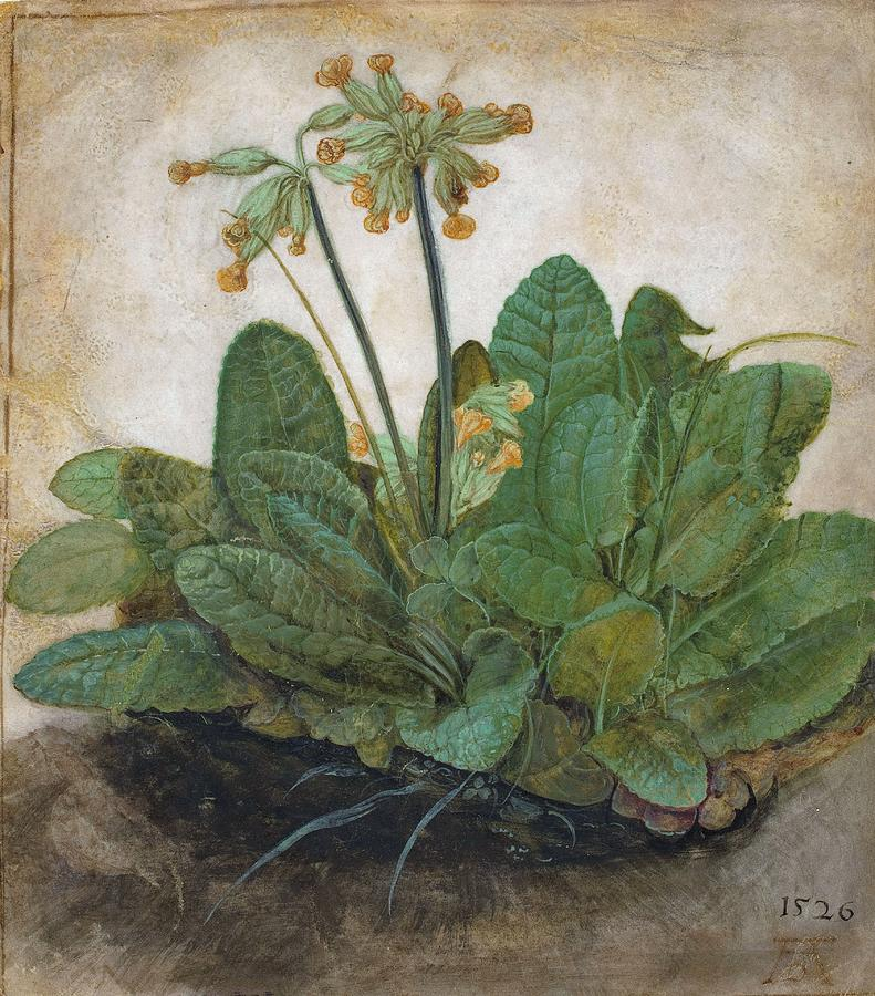 Tuft Of Cowslips Painting