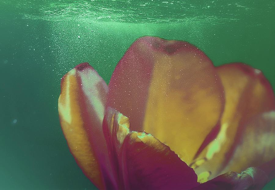 Tulip Underwater 2 Mixed Media