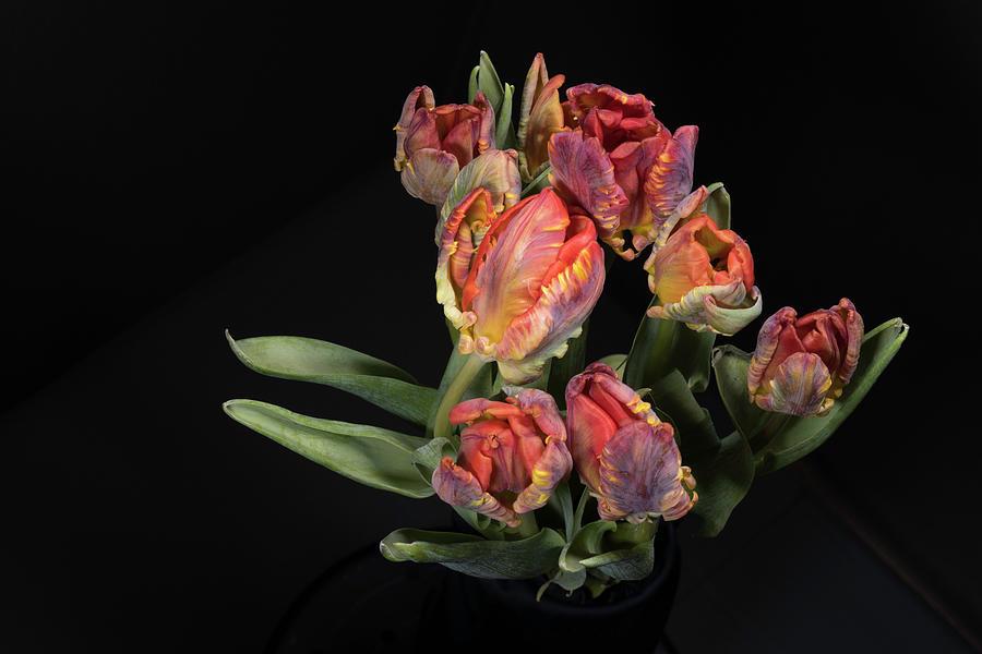 Tulip_2 by Jay Anne Boza