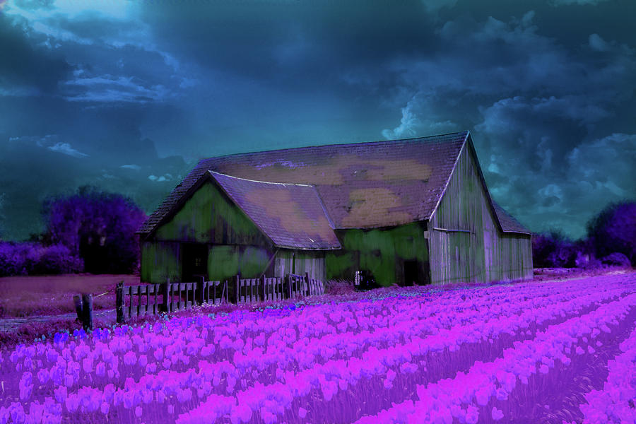 Tulips Digital Art - Tulips and barn experiment by Jeff Burgess