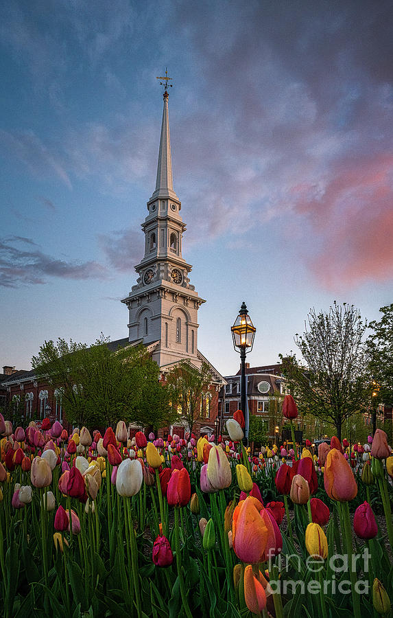 Tulips And The Church Photograph