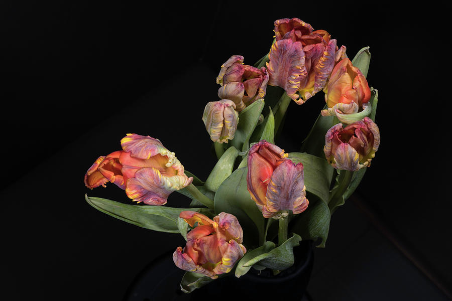 Tulips by Jay Anne Boza
