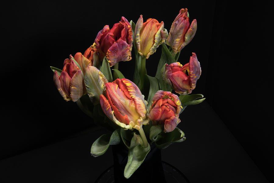 Tulips_3 by Jay Anne Boza