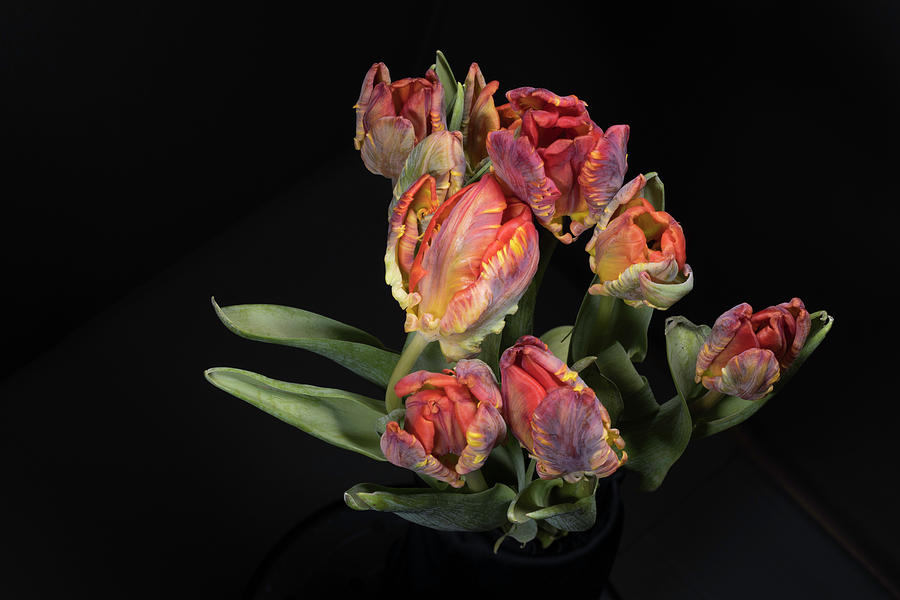 Tulips_8 by Jay Anne Boza