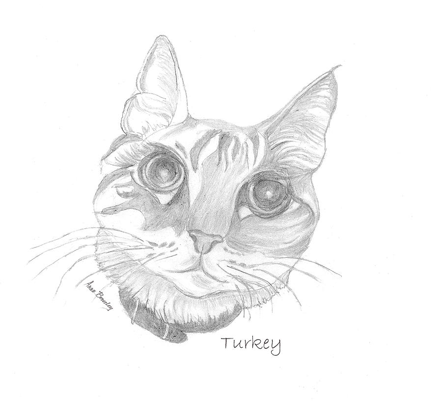 Turkey the Cat by Anne Beverley-Stamps