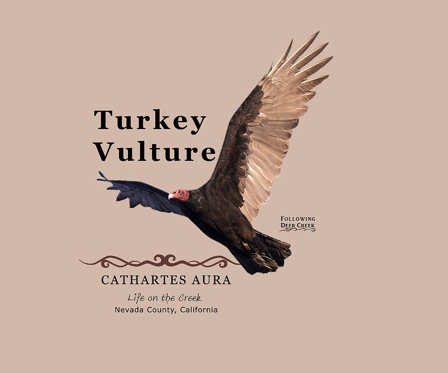 Turkey Vulture Cathartes aura by Lisa Redfern
