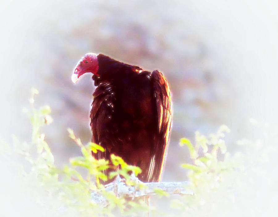 Turkey Vulture Totem by Judy Kennedy