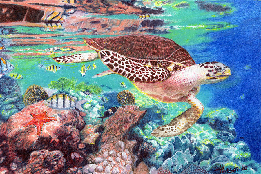 Turtle On The Reef Drawing