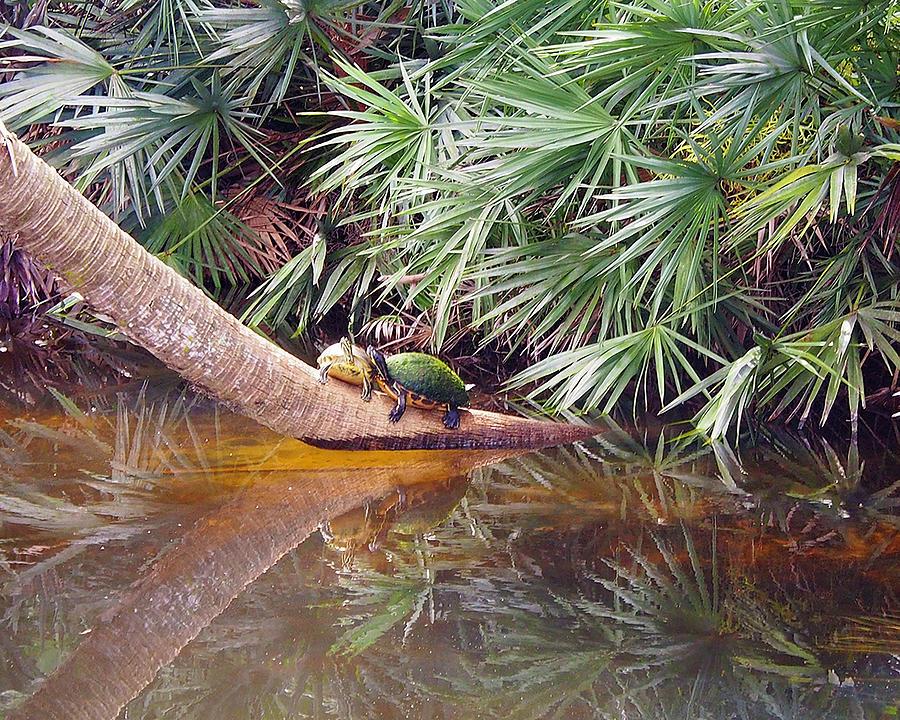 Turtle Twosome Photograph by Karen Zuk Rosenblatt