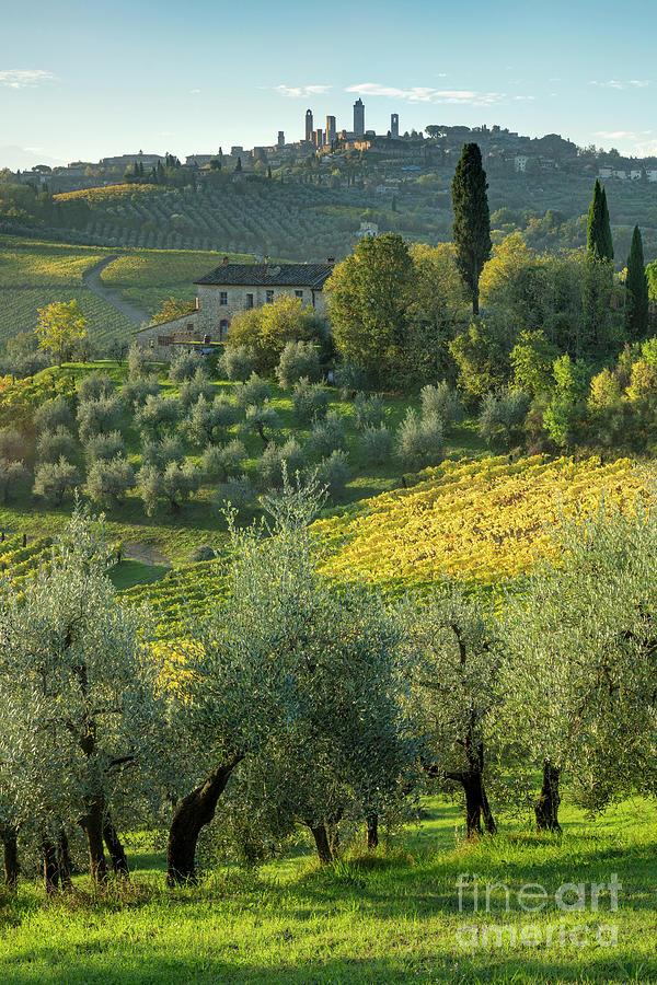 Tuscan Countryside Below San Gimignano - Italy Photograph