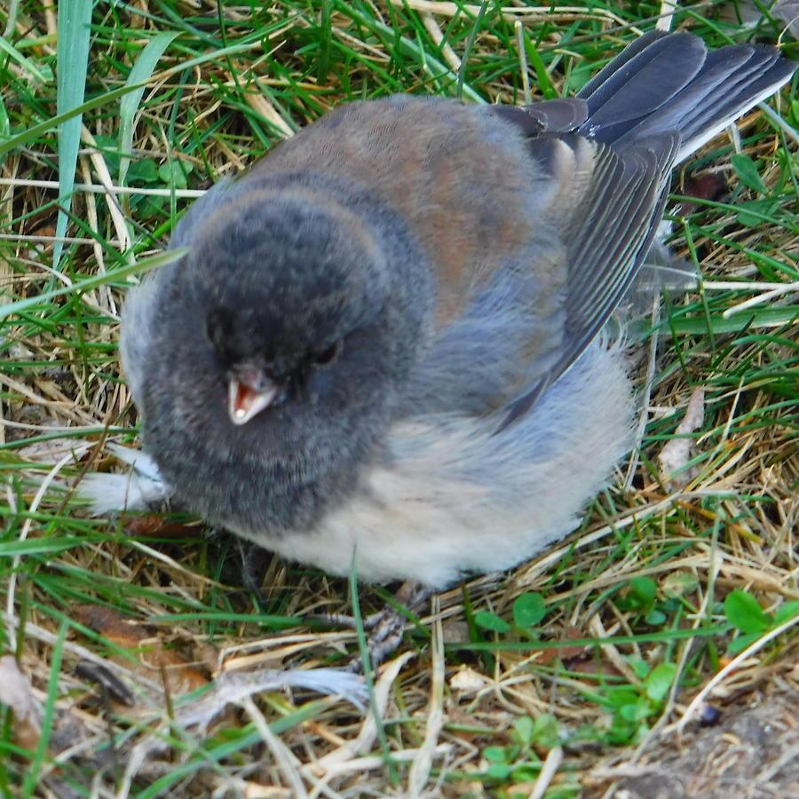 Vance Photograph - Tweet E. Bird by YHWHY Vance